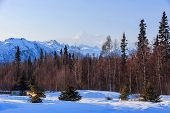 Mount McKinley Whit mountain and trees at Denali National Park and Preserve poster