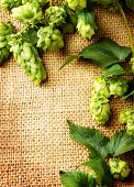Green hops close up over burlap background border. Hop plants with leaves and cones on sack linen texture. Medicine concept. Vertical photo poster