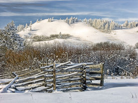 Old Cattle Fence