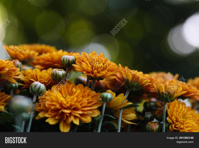 Beautiful Yellow Image Photo Free Trial Bigstock