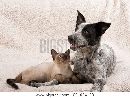 Young cat and dog lying down side by side, with cat looking at the dog