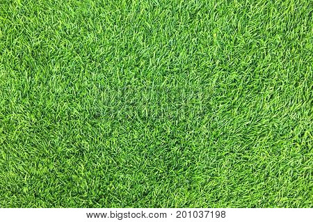 Artificial Green Grass Background, Top View