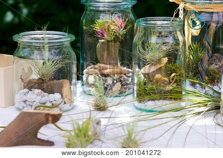 Tillandsia ionantha and tillandsia argentea in a decorative jar.