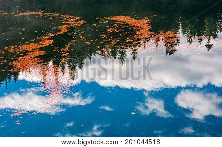 Foliage On The Water Reflecting Forest And Cloud
