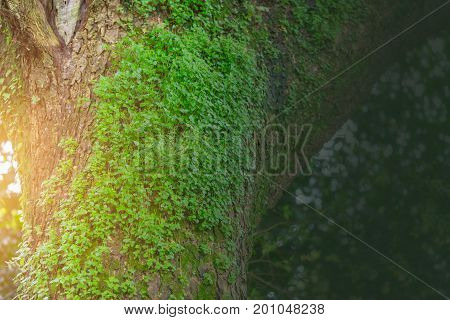 Plant Glow Over The Tree Rain Forest Wet Moisture Environment And Nature Ecosystem For Background Wi