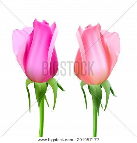 Realistic roses Bud with stem and leaves. Closeup, isolated on a white background the flower Bud of the rose. The symbol of romance and love, a template for a greeting card, 3D illustration.
