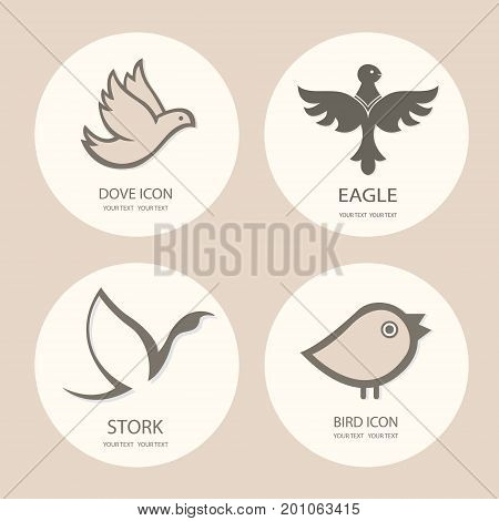 Bird logo template set. Abstract Icon. Business concept. Use for any type of company. vector illustration