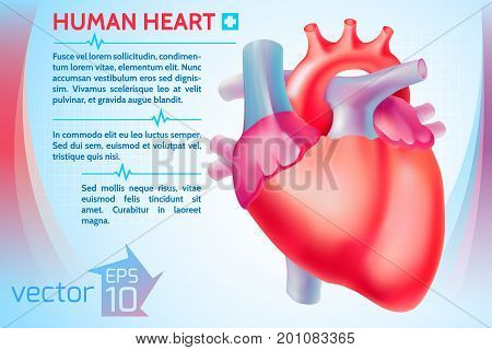 Healthy medicine template with text and colorful human heart on light background vector illustration