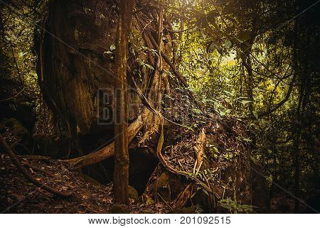 The Roots Of The Trees In The Jungle. Nature Rain Forest. Tropical Rainforest Landscape. Malaysia, B