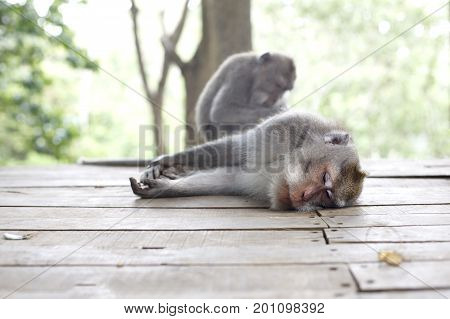 Two monkeys. Wildlife tropical Monkey Portrait in the forest. Care for one another