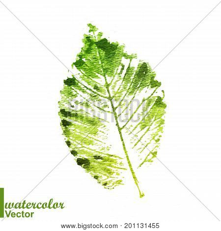 Watercolor stamp of a leaf. Think Green. Colorful watercolor stamped painted leaves. Vector illustration. ECO green. Prints of leaves.