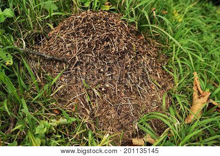Anthill in the Tyrolean Alps in summer