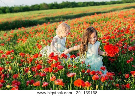girl, poppies, agriculture, food production and ecology, nature concept - two girls, sisters in white and blue holiday dresses with a bouquet full of red of poppy on field cultivation of poppies