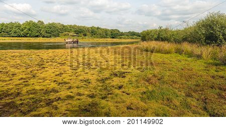 Idyllic landscape with a group of Konik horses in the water of small lake in a marshy nature area in the Netherlands. In the background is a bird observation post. It is a sunny day in the summer season.