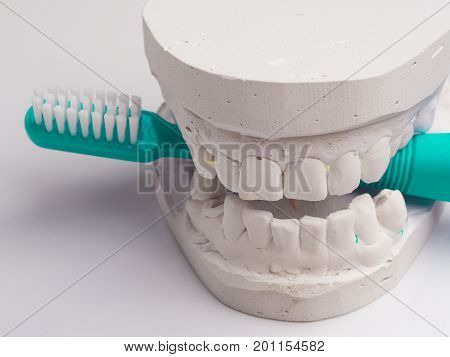 Oral hygiene health concept. Closeup green toothbrush in dental gypsum model plaster
