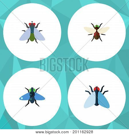 Flat Icon Housefly Set Of Housefly, Bluebottle, Fly And Other Vector Objects