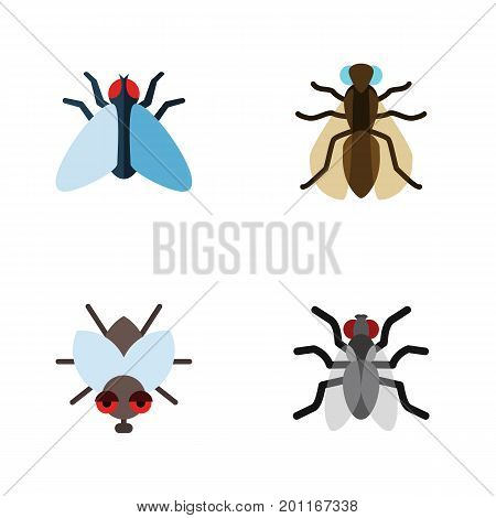 Flat Icon Buzz Set Of Housefly, Mosquito, Buzz And Other Vector Objects