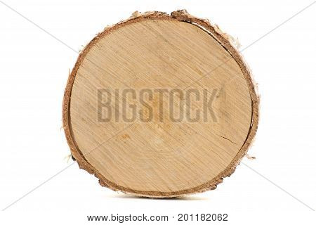 Cut of tree trunk on white background isolation