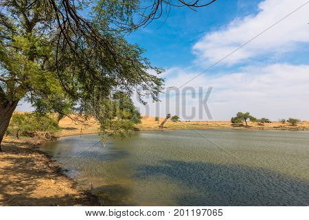 Horizontal picture of colorful sunny day in a oasis in Thar Desert located close to Jaisalmer the Golden City in India.