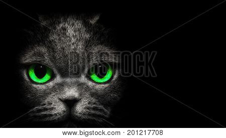 View from the darkness. Cat with green eyes on black background