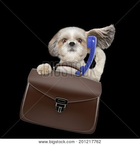 office worker businessman shitzu dog with suitcase or bag isolated on black background