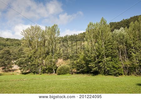 Hay meadows and poplar groves. Photo taken in La Pola de Gordon, Leon Province, Spain