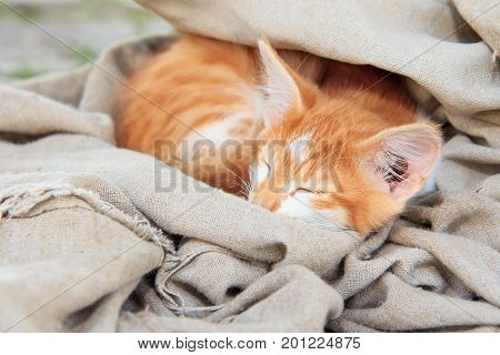 Little ginger kitty is sleeping in piece of tarpaulin outdoor