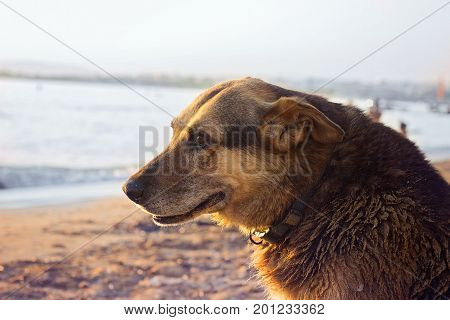 Old stray dog cooling himself on the beach