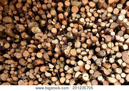 Firewood. Mixed wood chopped and stacked to dry for firewood. Background.