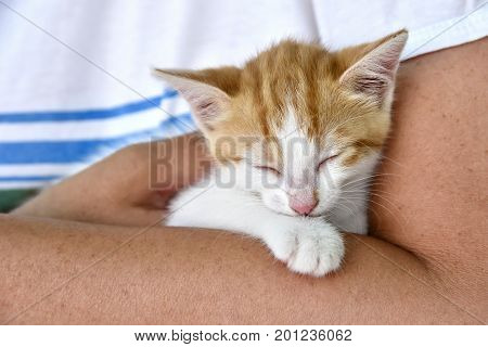 Woman holding purring kitten in her arms
