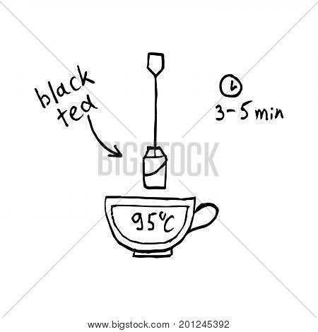 Tea making instruction how to brew black tea. Hand drawn vector illustration.
