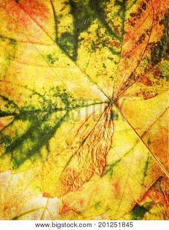 autumn dried leaf texture grunge style s floral background