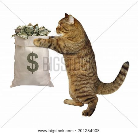 The cat is holding a big bag of money. White background.