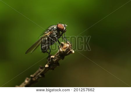 A Fly On A Branch