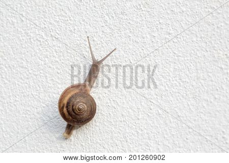 snail on white wall ( focus at head ) .