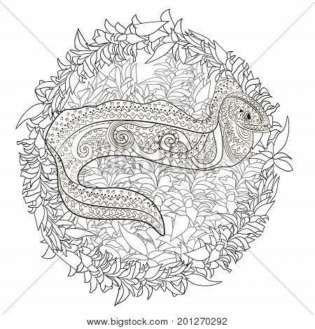 Ugly and creepy fish with high details for anti stress coloring page, illustration of a moray in tracery style. Sketch of moray eel for tattoo, poster, print, t-shirt in zentangle style. Vector.