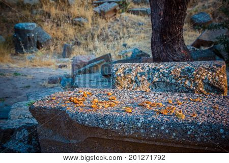 Cracked Nuts Close-up In Ruins Of Ancient Amphitheatre In Erytrai Turkey