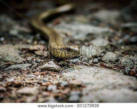 Slow warm crawling on the ground, Czech republic