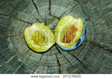 Fresh plum with worm inside close up on the wooden stump