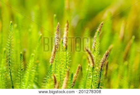 Small green plants growing in bog area