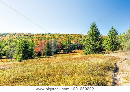 Rocky Landscape Meadow Hill In Dolly Sods, West Virginia In Autumn With Trail Path