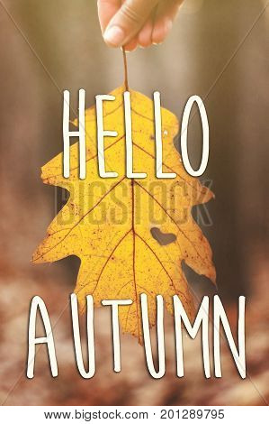 Hello Autumn Fall Text Sign On Hand Holding Beautiful Yellow Autumn Leaf With Heart Shaped Hole In A