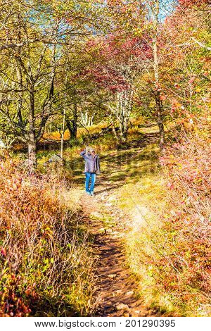 Young woman standing on trail path in autumn forest on hill in Dolly Sods West Virginia