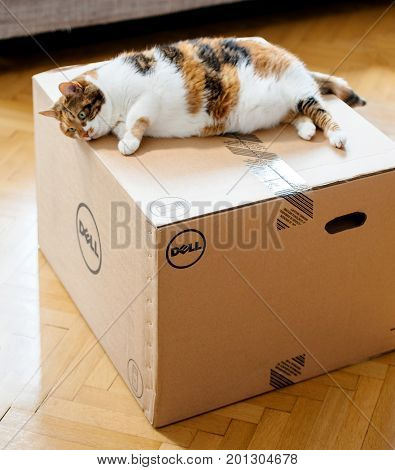 PARIS FRANCE - AUG 6 2017: Cat inspecting new DELL workstation computer box
