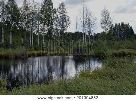 forest swamp day rural scenic outdoors scenic outdoors