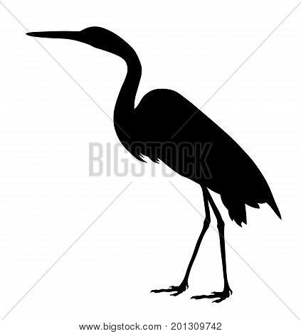 Vector illustration of great egret silhouette  on white background