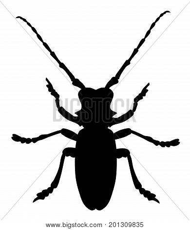 Vector illustration of morimus funereus beetle silhouette