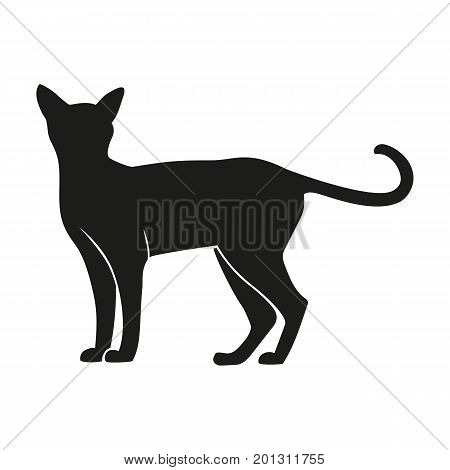 Icon of cat silhouette. Kitten, companion, feline. Domestic animal concept. Can be used for topics like veterinary, breeding, pet