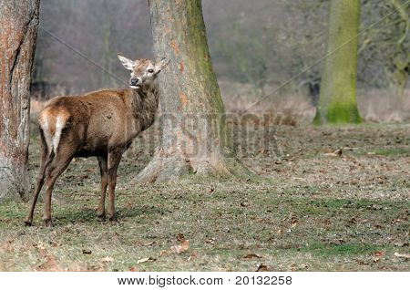 Fawn in nature . Wildlife photo