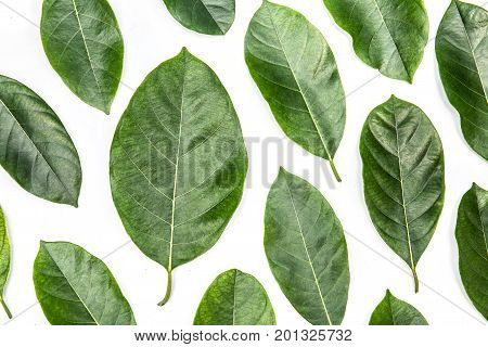 leavesof jackfruit tree isolated on white background. Tropical plant green leaf spring time banner environment concept. Close-up studio photography. background beautiful beauty closeup concepts floral fragility front full green head idyllic isolated leaf poster